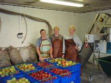 bollhayes apples and pressing team